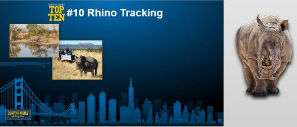 Rhino.Intel.9.14