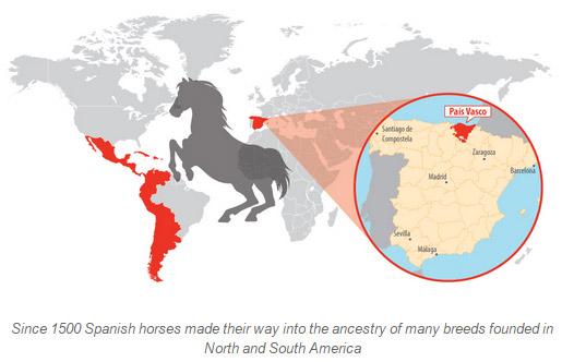 spanish-horses