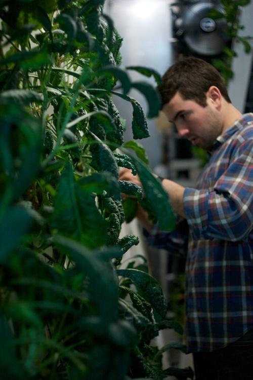 Freight-Farms-Kale-Zip-Grow