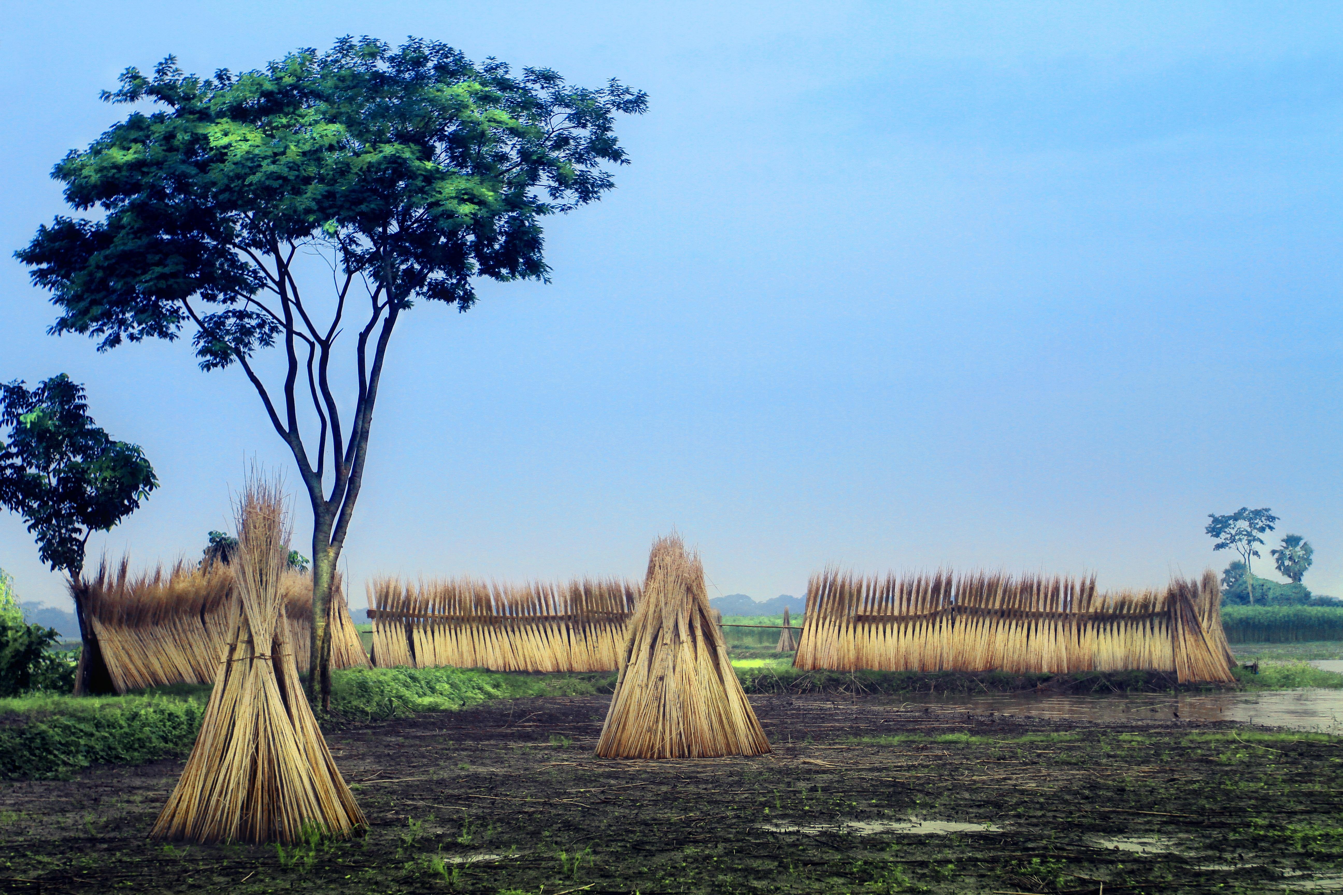 Africa Straw