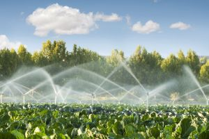 Smart technology is helping users to manage irrigation more